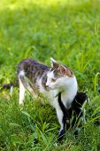 Cute little kitten with his mom, outdoors