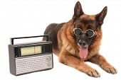 Funny cute dog with radio isolated on white