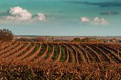 Autumn On The Wineyard