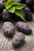 stock photo of solanum tuberosum  - Vitelotte blue - JPG