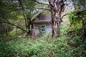 foto of nuclear disaster  - wooden cottage in small abandoned village called Stechanka in Chernobyl Nuclear Power Plant Zone of Alienation Ukraine - JPG