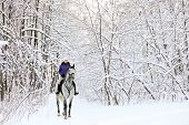Pretty girl horseback riding in the winter forest