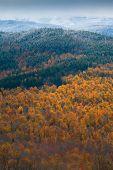 White Mountain Autumn