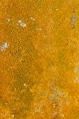Yellow Lichen On Concrete Wall