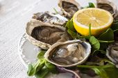 pic of oyster shell  - fresh French appetizer oysters on ice with lemon - JPG