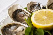 foto of oyster shell  - fresh French appetizer oysters on ice with lemon - JPG
