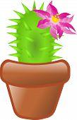 Green Cactus In Flowerpot