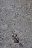 picture of dog tracks  - Footprints and dog paw tracks imprinted on wet concrete surface abstract background.