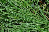 Green Grass Rain