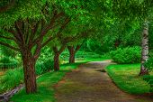 Beautiful fairy walkway with wide trees. Vibrant green colors.