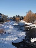 Yampa River And Cottonwoods In Winter,