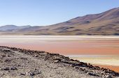 Bolivia, Antiplano:  Laguna Colorada - flamingos