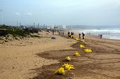 Municipal Workers Cleaning Debris On Beach In Durban, South Africa