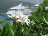 wilting flowers with ship