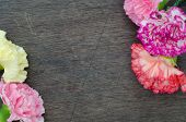 Carnation On Wooden Background