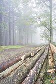 Logs Trees