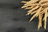 Spikelets of wheat on dark wooden background