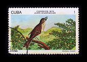 Post Stamp. Birds - Cuban Solitaire