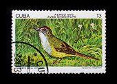 Post Stamp. Birds - Torreornis Inexpectata