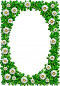 daisy cartoon frame