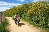 Asian Countryside, Vietnamese Farmer, Dalat Wild Sunflower