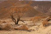 Dried Tree in Desert
