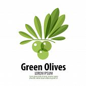 Green Olives vector logo design template. harvest or food icon.
