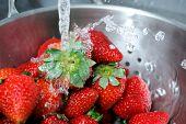 Rinsing Strawberries