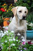 pretty dog amongst the flowers