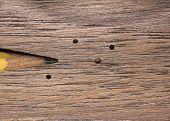 Wood Boring Beetle Damage