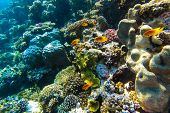 foto of sky diving  - red sea coral reef with hard corals fishes and sunny sky shining through clean water  - JPG