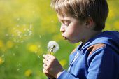 foto of blowing  - Child blowing dandelion seeds in a meadow concept for new life - JPG