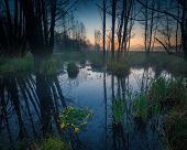picture of wetland  - Beautiful sunrise over foggy wetlands - JPG