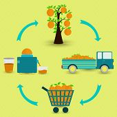 foto of production  - Orange fruit production steps - JPG