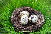 stock photo of grass bird  - Nest with bird eggs over green grass background - JPG