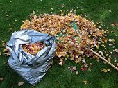 Bag Of Leaves