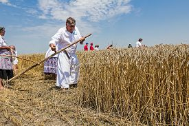pic of scythe  - Farmer is reaping wheat manually with a scythe in the traditional rural way - JPG