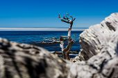 Постер, плакат: Pescadero Point At 17 Mile Drive In Big Sur California