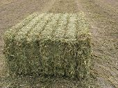 Single Large Bale Of Peavine Hay
