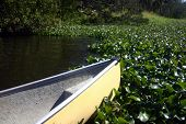Canoe Encountering Water Vegetation