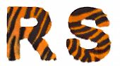 Tiger Fell R And S Letters Isolated