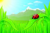 Vector grassfield landscape with ladybug, dew drops and sunny mountains.