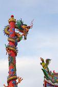 Chinese  Dragon And  Bird