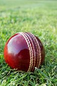 Cricket Ball On Green Grass.