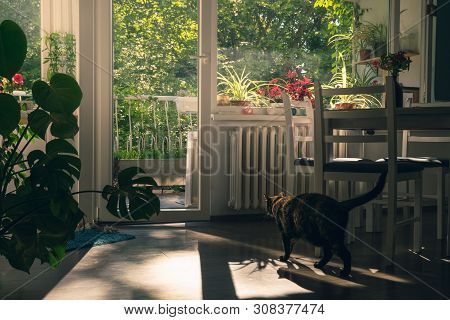 poster of Home Decor Interior With Cat. Home Decor. Home Interior With Cat. Beautiful Home Interior Decorate W
