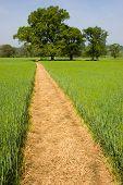 Footpath Over A Grass Field