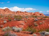 Vibrant Desert Landscape With Brilliant Red Orange Rocks, Plants, And Blue Sky poster