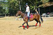 Mujer piloto entrena el caballo en el curso de equitación