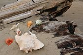 Seashells clustered on driftwood