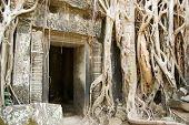 Ta Prohm Temple and jungle